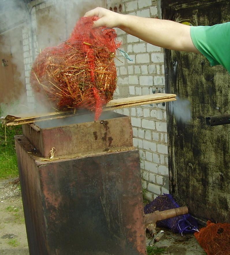 Выращивания вёшенок на соломе